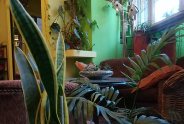 Perché dovresti tenere delle piante in ufficio