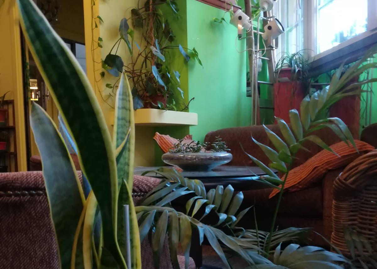 Le piante a spazio19 e i benefici delle piante in ufficio